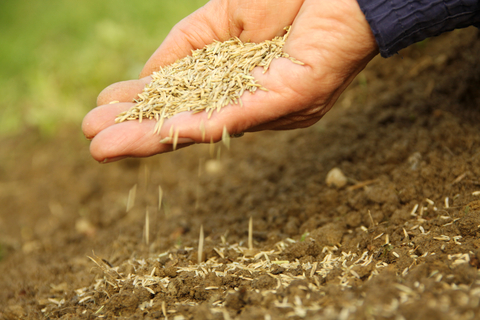 When You Should Sow Gr Seed Lawn Uk