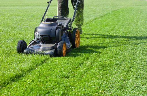 all sorts lawn grass seed