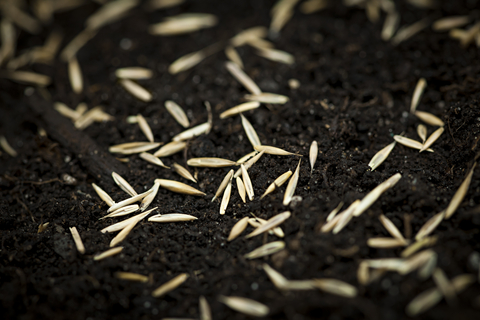 how to grow seeds in soil