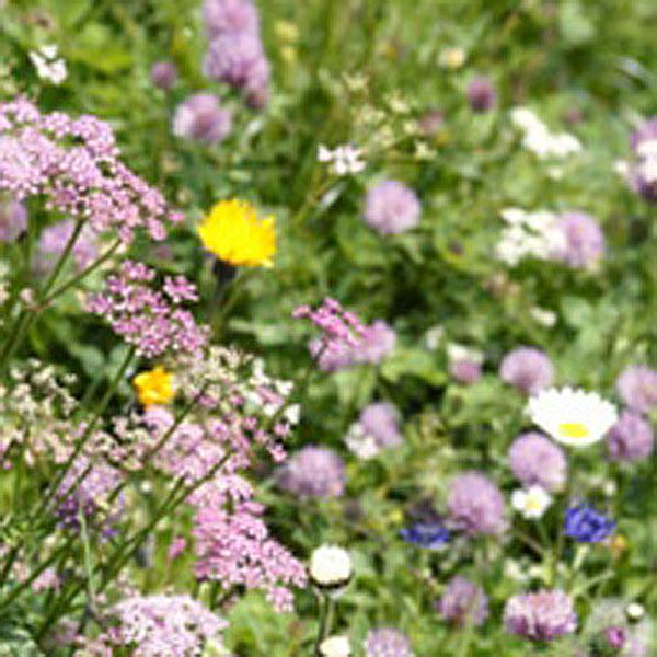 Fab Meadow 80/20