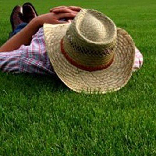 Lazy Lawn