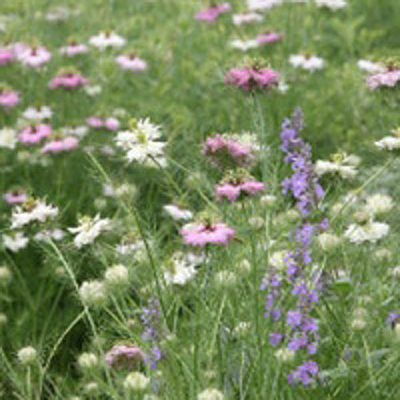Wildflower mix for acidic clay soils