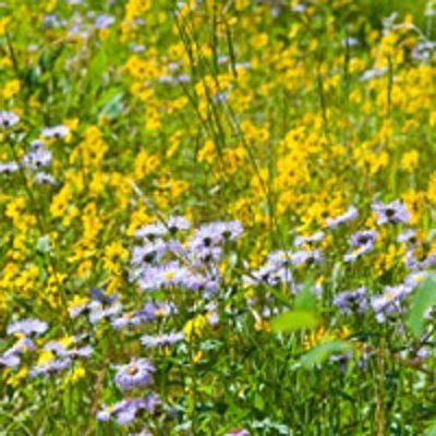 Wildflower mix Calcareous soil