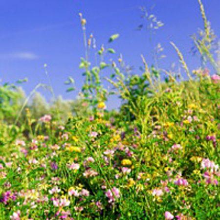 Wildflowers hedges & Shade