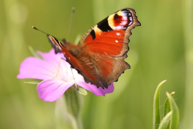 Wildflower seed more popular than ever