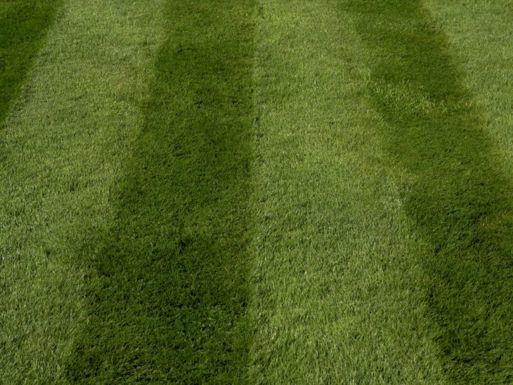 Treat your lawn now with Lawn Sand dressing