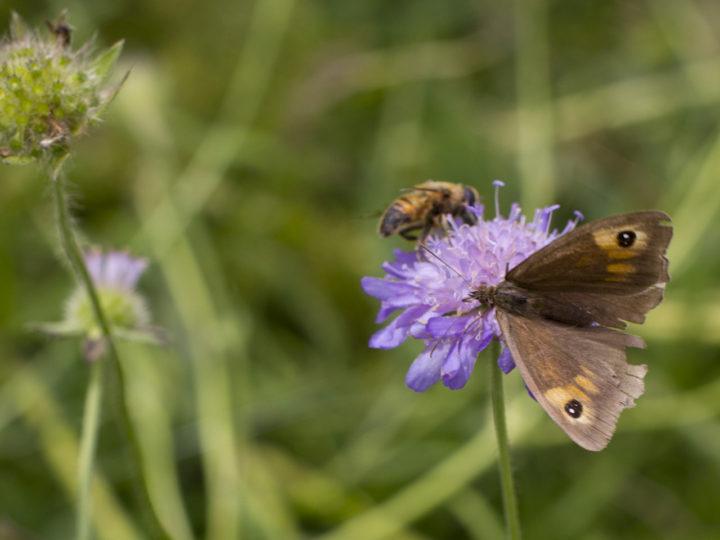 Using wildflowers to restore habitats