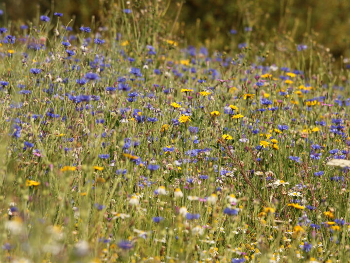 It's back! Enter the 2013 design a wildflower mix competition!