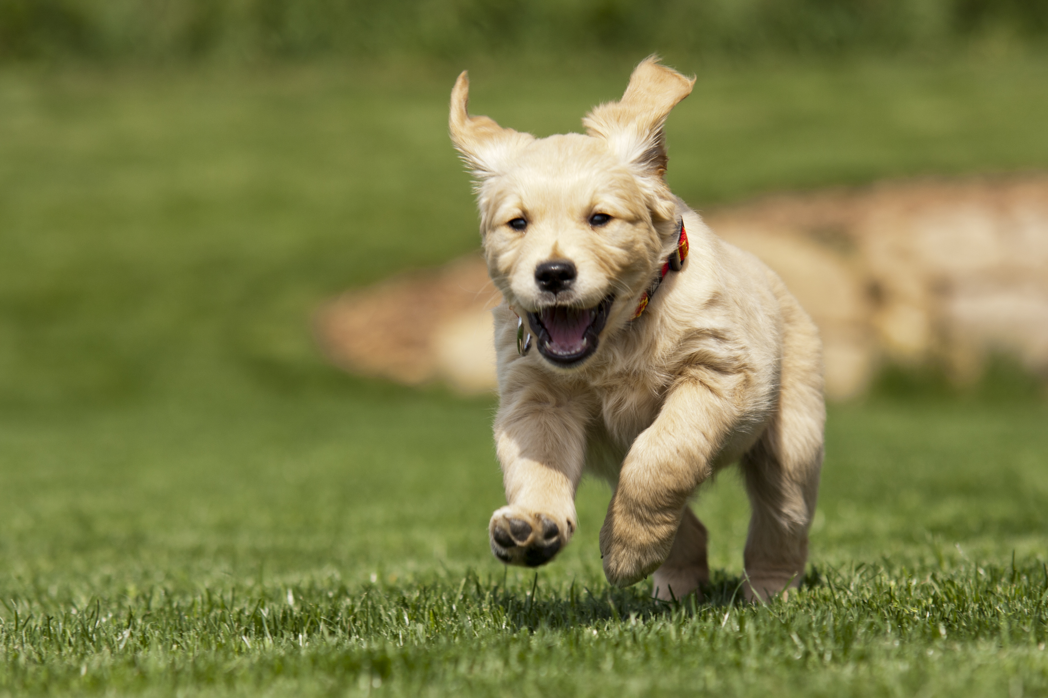 Top dog: Meet our best selling lawn seed - Lawn UK