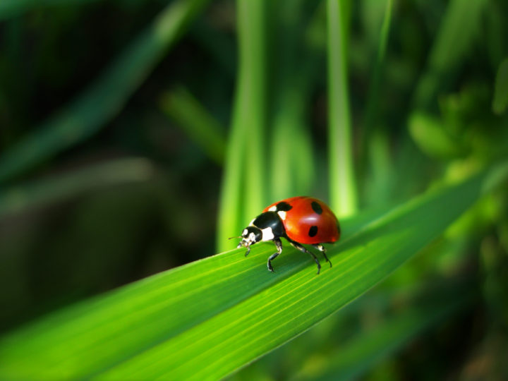 Lawn Pest Control 101 – Learn How to Get Rid of Lawn Pests