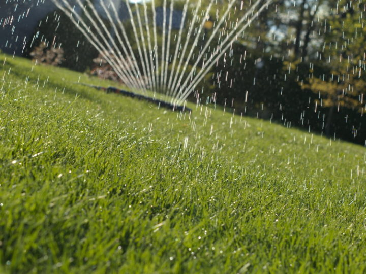 Don't get lost with Bermuda Grass