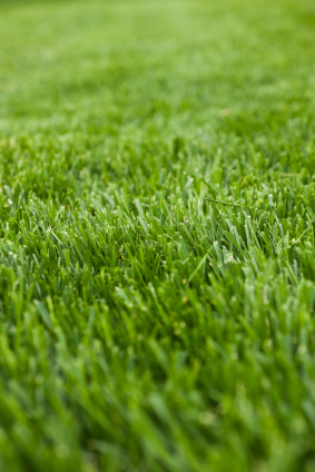 Step by Step Method on How to Grow Fescue Grass