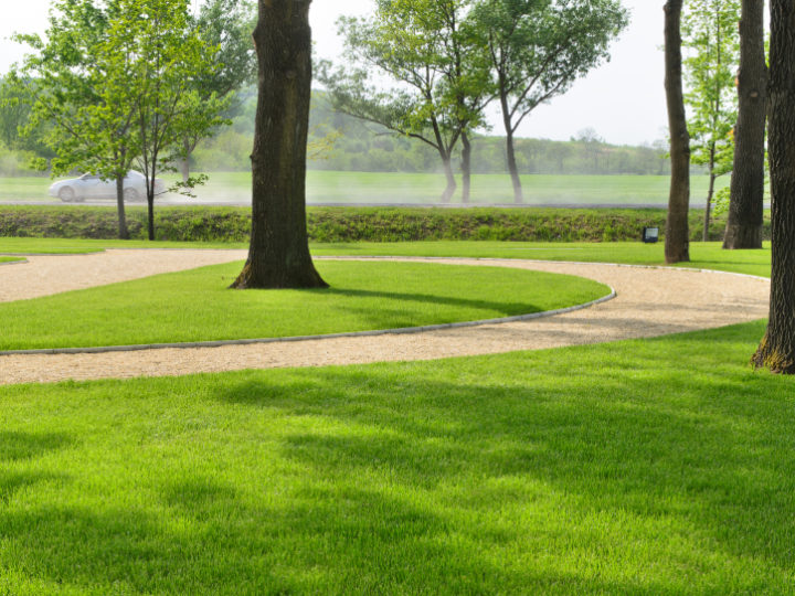 Choosing the Right Grass Seed for Shady Lawns