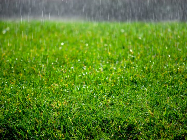 What does the Wettest February on record mean for your lawn?