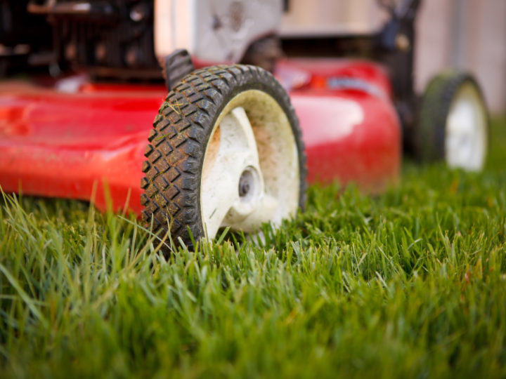 sod single guys The grass guys was founded in 2008 on the premise that it is difficult to find good help at an affordable price we find that if you are honest single mow $ 35.