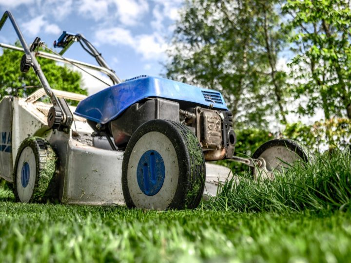 Fertiliser: What, When and How much to feed your lawn?
