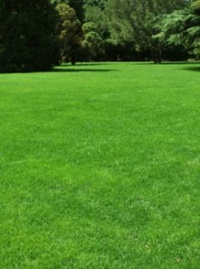 tough green lawn seed.jpg