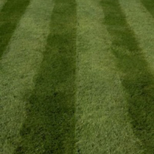 fast grass quality lawn seed