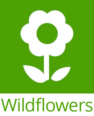 Wildflower seed icon