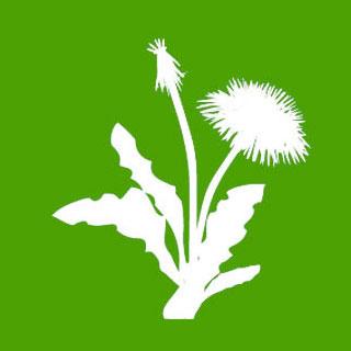 Weed/Moss Killers