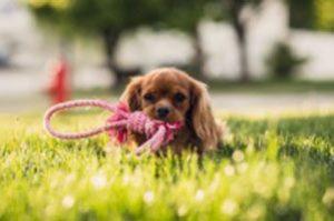 puppy-grass