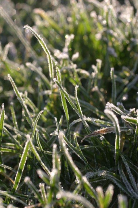 Frozen Lawn