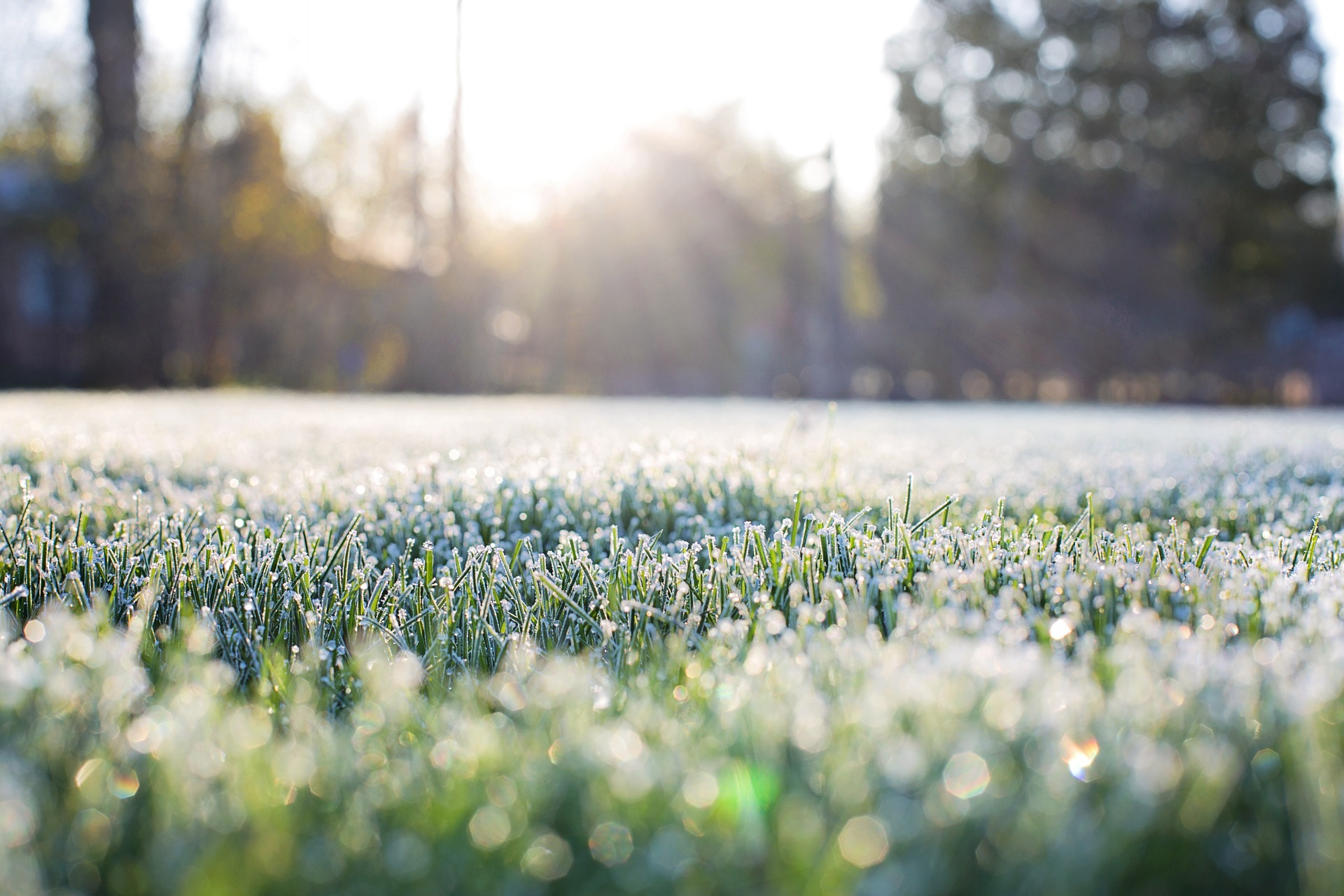 Cold weather causes slower germination