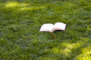 Lawn Glossary