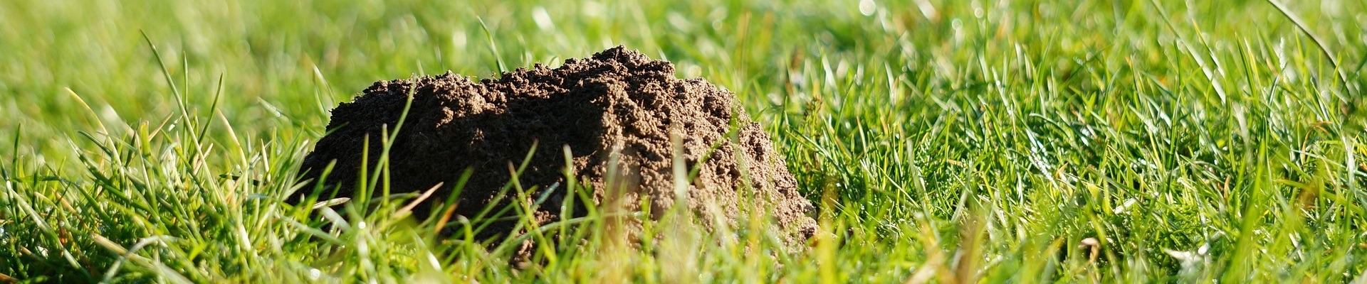 Things that can affect your lawn