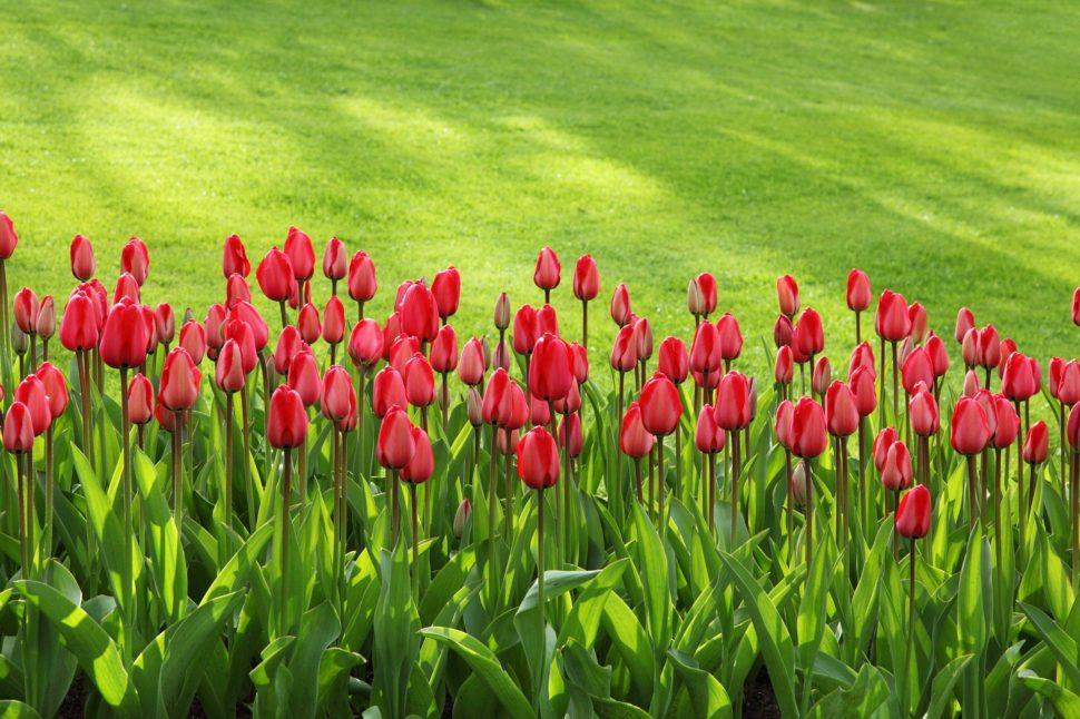 Spring Lawn Seeding